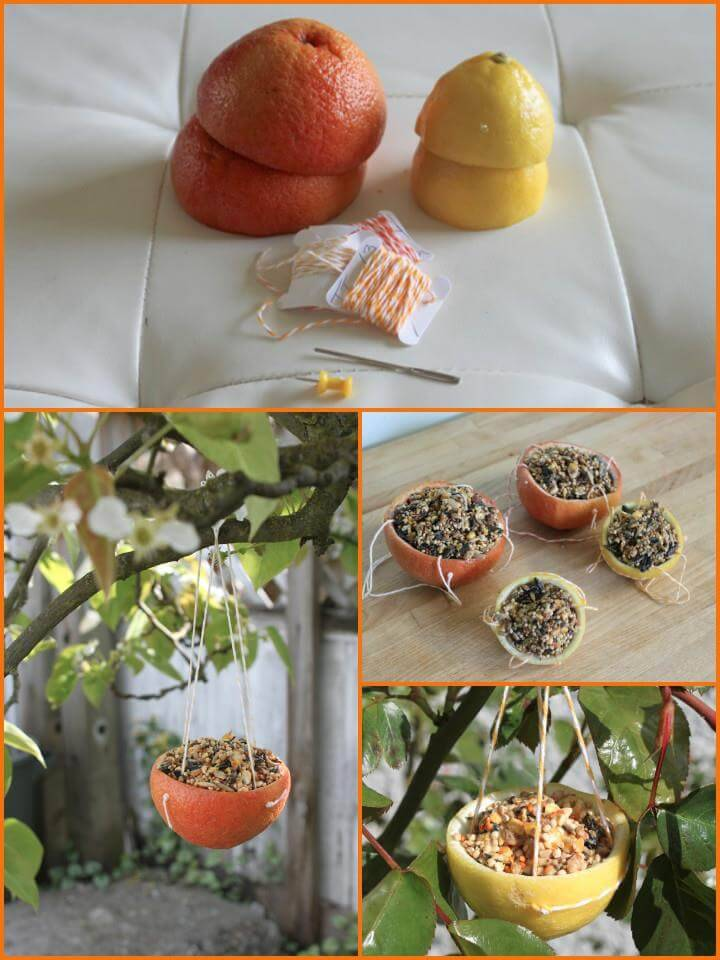 handmade citrus cup bird feeder