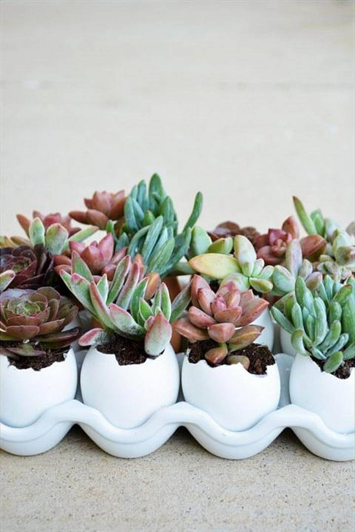 DIY Succulent Egg Shells