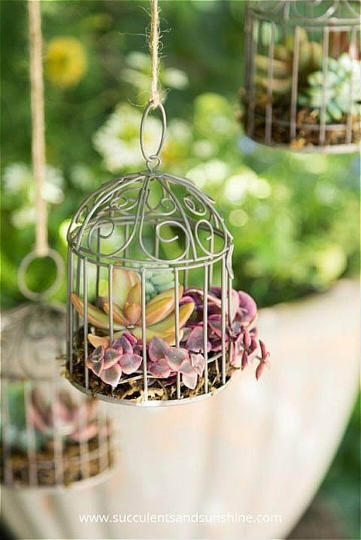 Beautiful Succulent Bird Cages