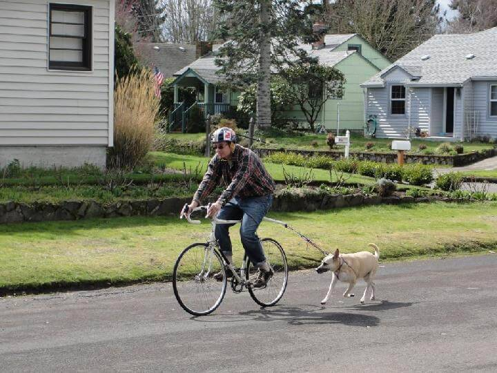DIY Bike-Mounted Bungee Cord Dog Leash