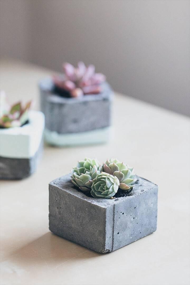 DIY Concrete Succulent Mini Planters