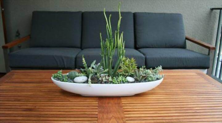 DIY Indoor Succulent Dish