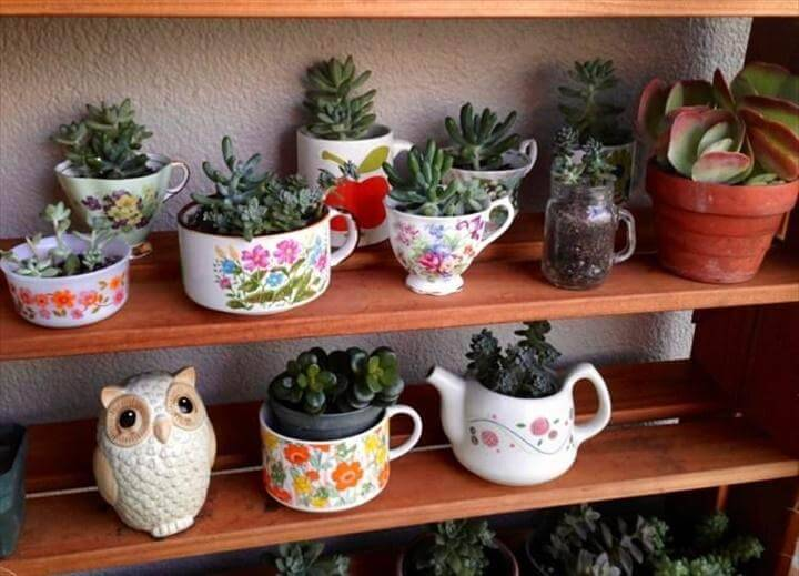 DIY Indoor Succulent Tea Cup Garden