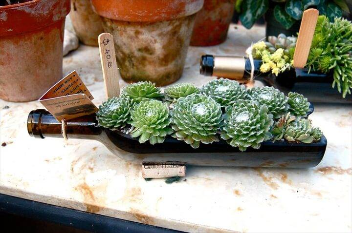 DIY Old Glass Bottle Succulent Planter