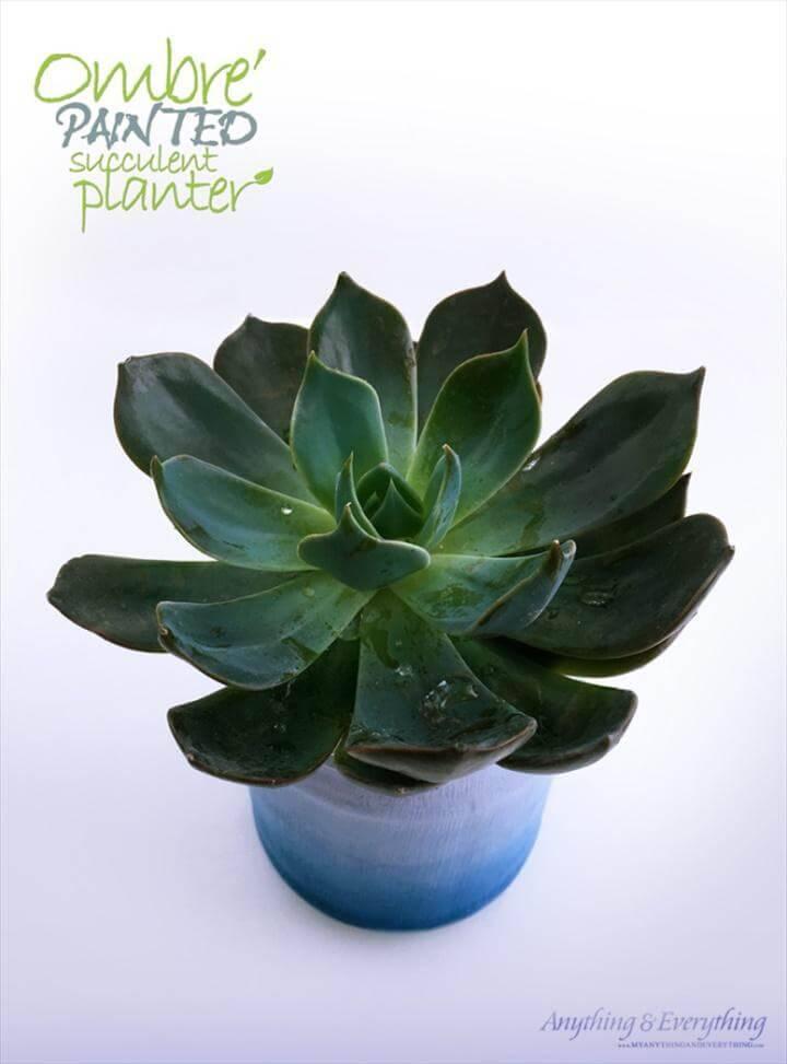 DIY Ombre Painted Succulent Planter