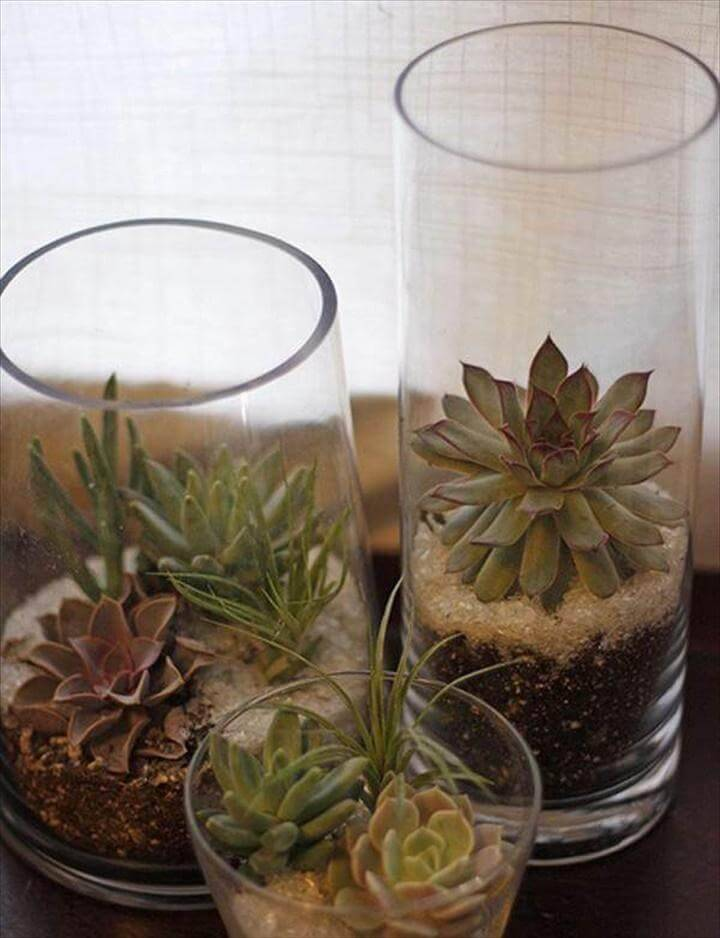 DIY Succulent Glass Planters