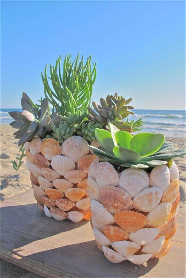 DIY Succulent Sea Shells