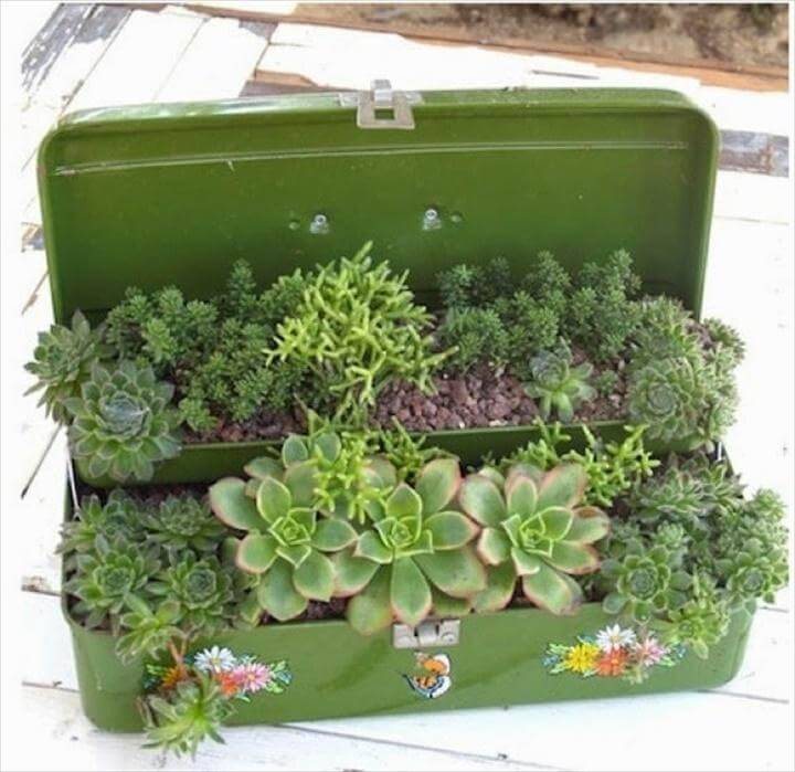 DIY Succulent Suitcase for Indoor