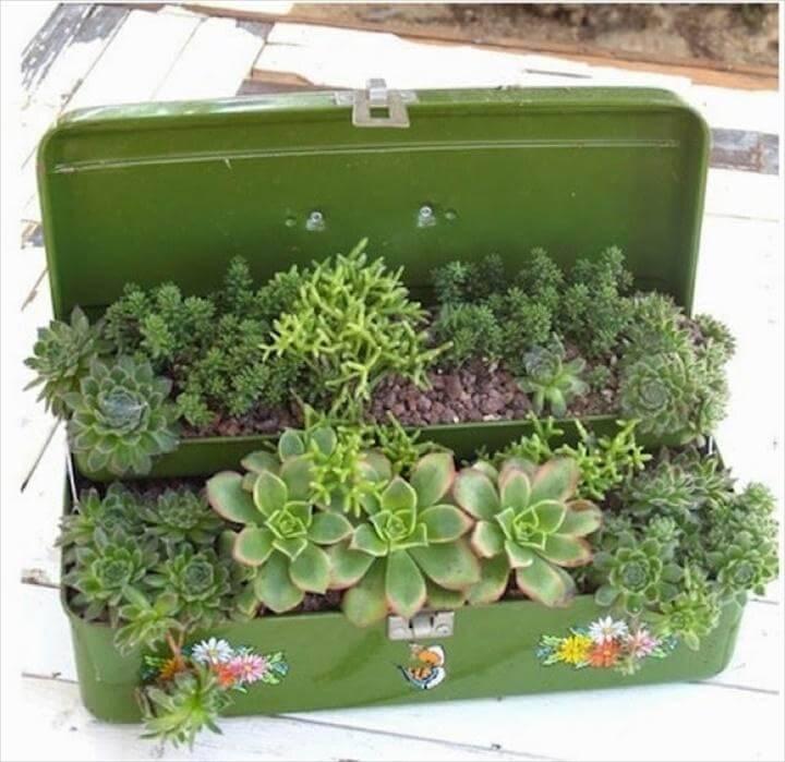 DIY Succulent Suitcase for Indoor