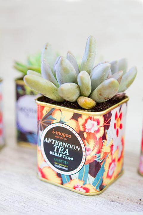 DIY Succulent Tea Tins