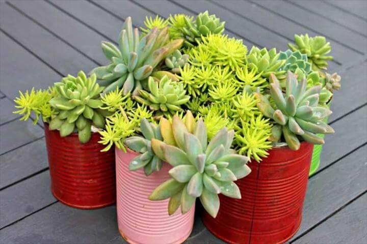 Painted Tin DIY Succulent Indoor Planters