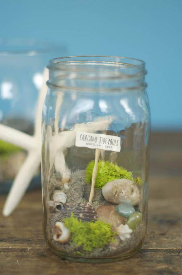 DIY Tide Pool Container Fairy Garden
