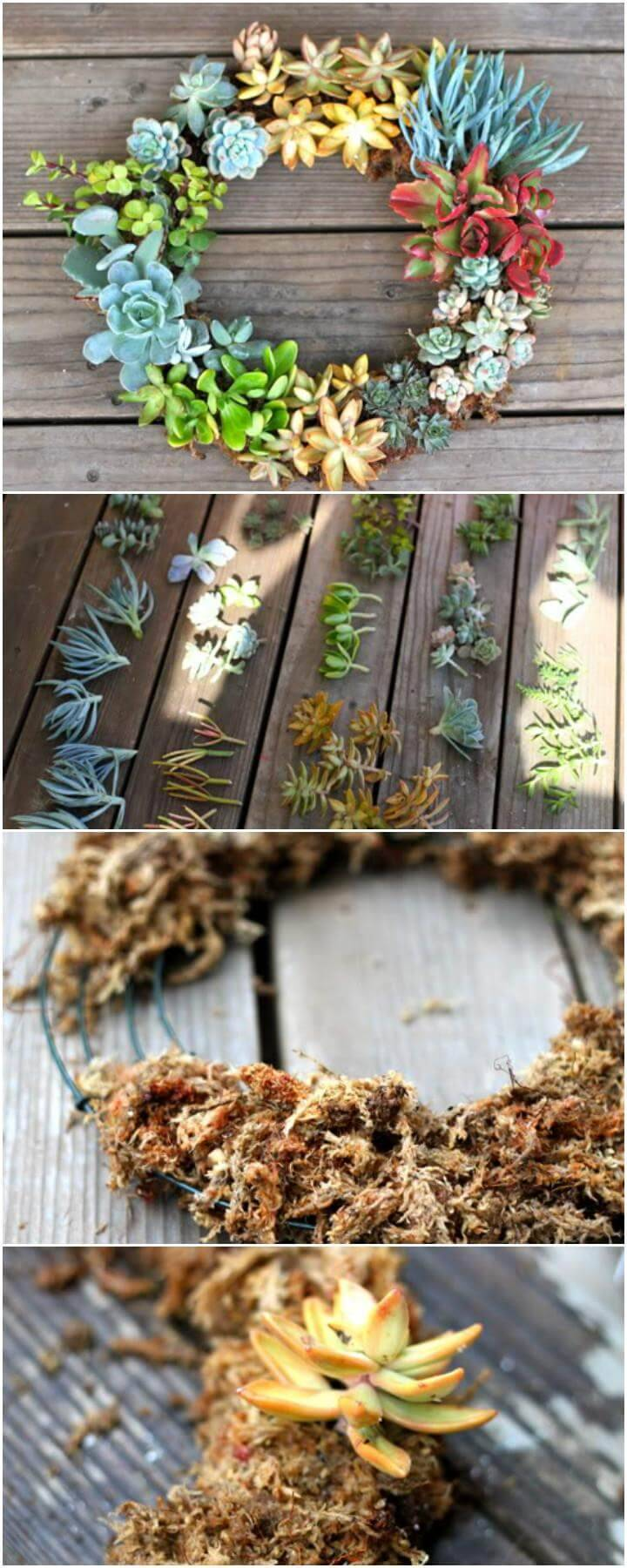 DIY Gorgeous Living Succulent Wreath