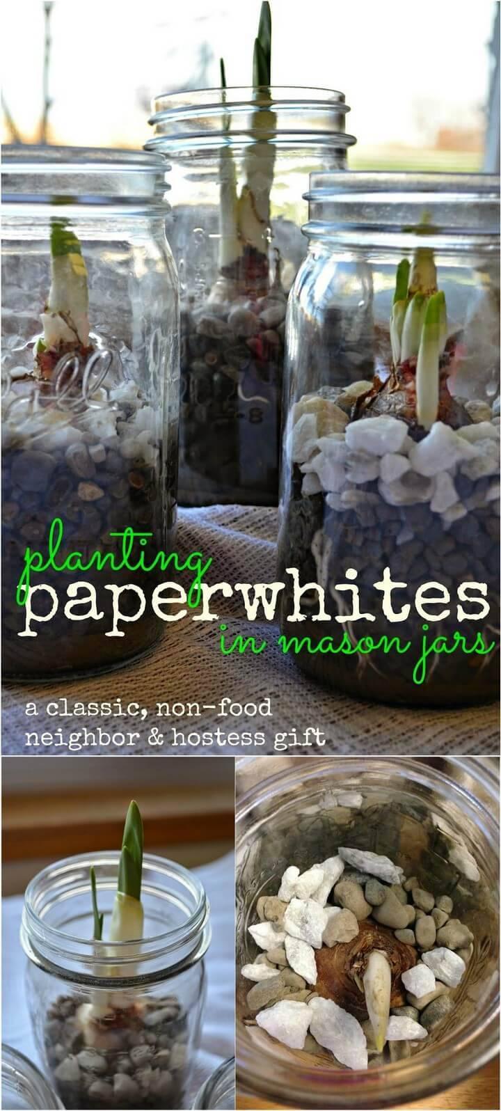DIY Paperwhites Mason Jar Planter Gifts