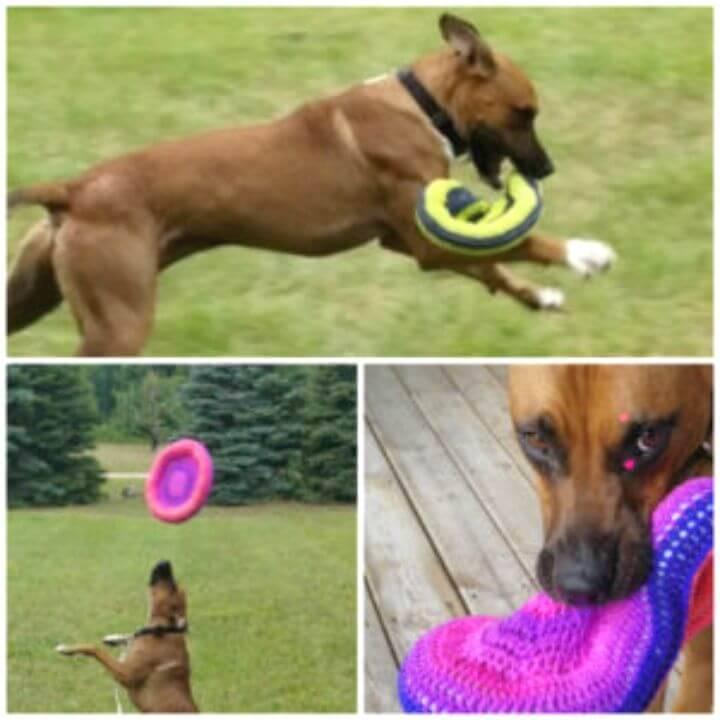 Free Crochet Frisbee Pattern For Pup