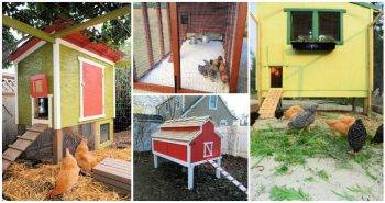 37 DIY Chicken Coop Plans That Are Budget Friendly