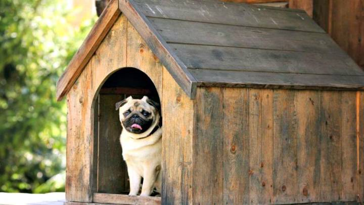 How To Build A Dog Kennel Tutorial