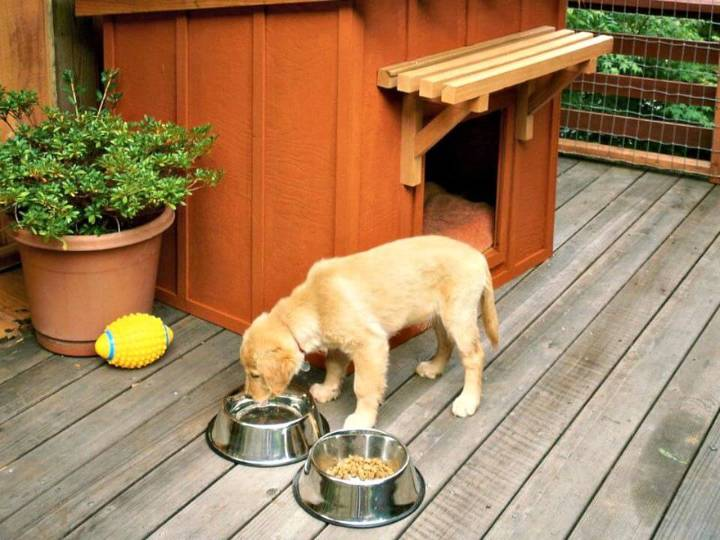 Easy How To Build A Mini Ranch House For Your Pooch Step By Step Tutorial