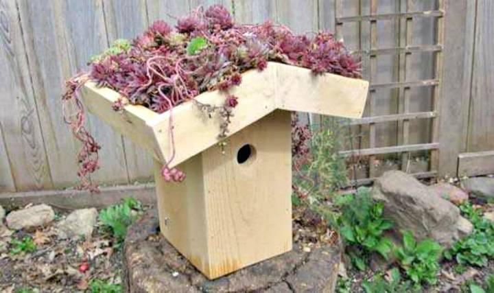 Easy DIY Green-Roof Birdhouse Tutorial