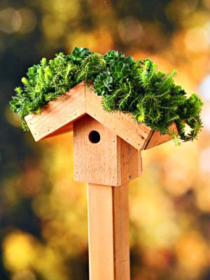Easy How To Build a Green Roof Birdhouse Tutorial