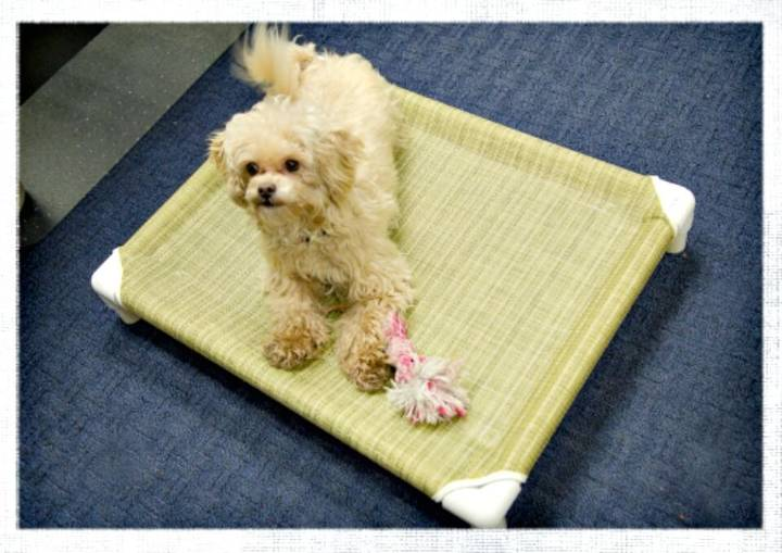 Adorable How to Make a PVC Pet Bed Tutorial