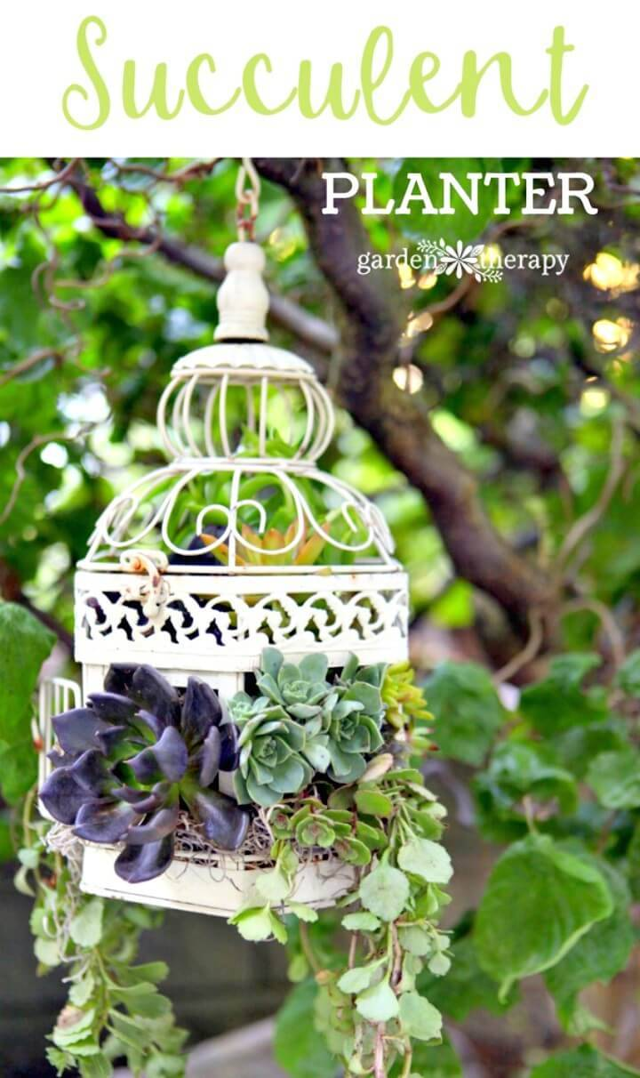 Make Your Own Birdcage Succulent Planter - DIY