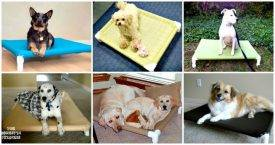 DIY Dog Bed Ideas Using PVC Pipe - DIY Crafts - DIY Projects - DIY PVC Pipe Ideas - DIY PVC Dog Bed Ideas