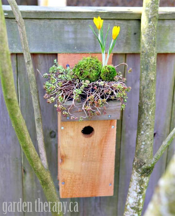 How To Build Green Roof Birdhouse - DIY