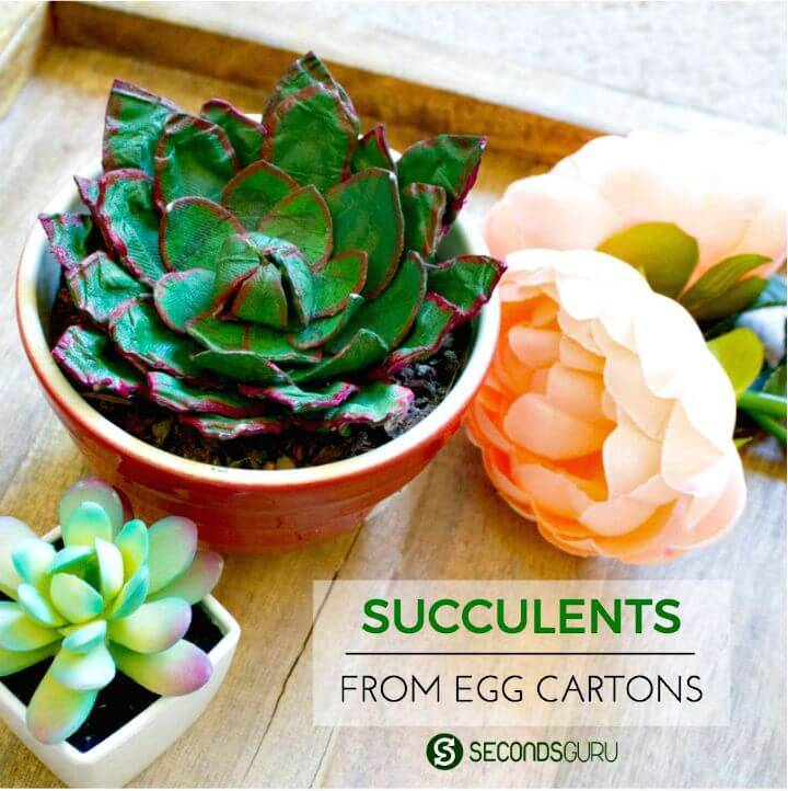 Easy DIY Egg-celent Succulent With Cartons
