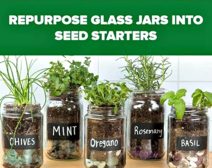 Easy DIY Herb Garden With Old Glass Jars