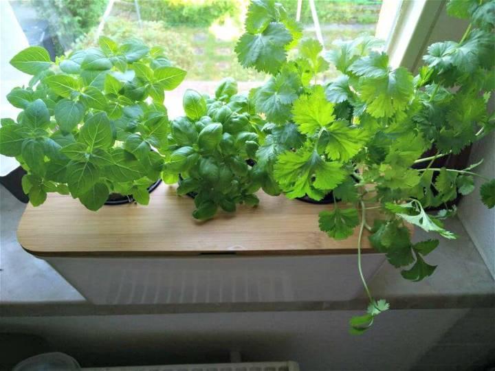 DIY Windowsill Hydroponic Herb Garden