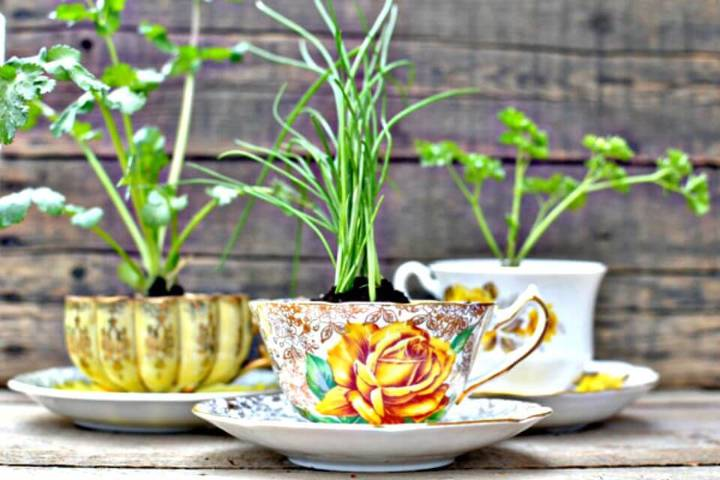 DIY Herbs in a Teacup - Eco-Friendly Favors