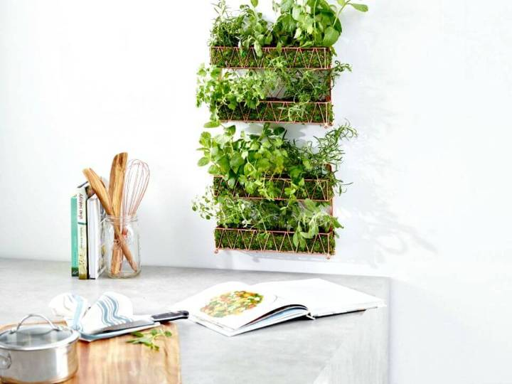 DIY Herb Garden In 5 Steps