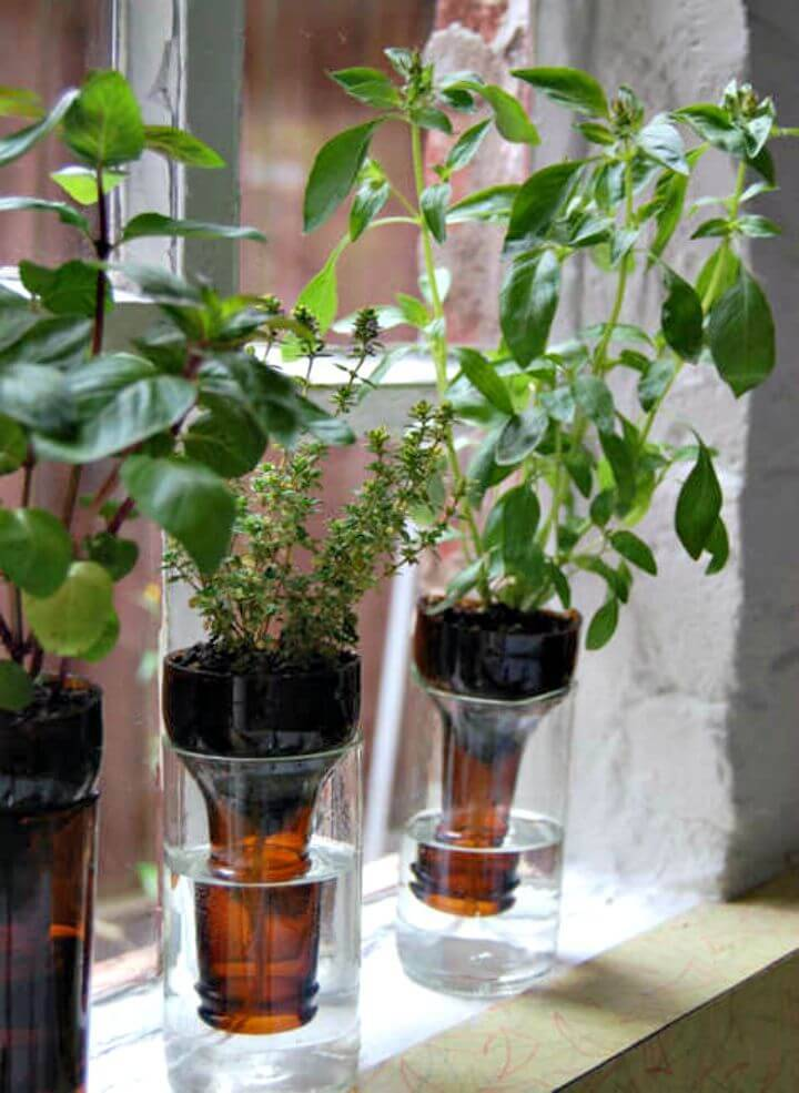 Quick DIY Herb Bottle Gardens