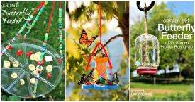 15 Best DIY Butterfly Feeder Ideas For Your Garden, DIY Butterfly Feeders, DIY Feeder Ideas, DIY Garden Projects, DIY Crafts