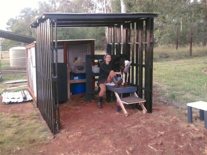 pallet animal shelter
