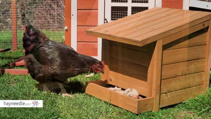 Build Your Own Chicken Feeder