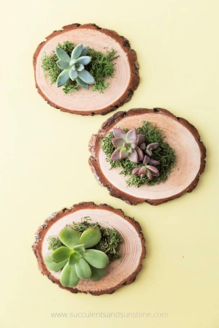 Cheap DIY Succulent Wedding Favors