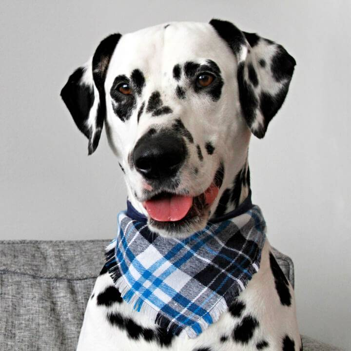 DIY Fringed Flannel Dog Bandana