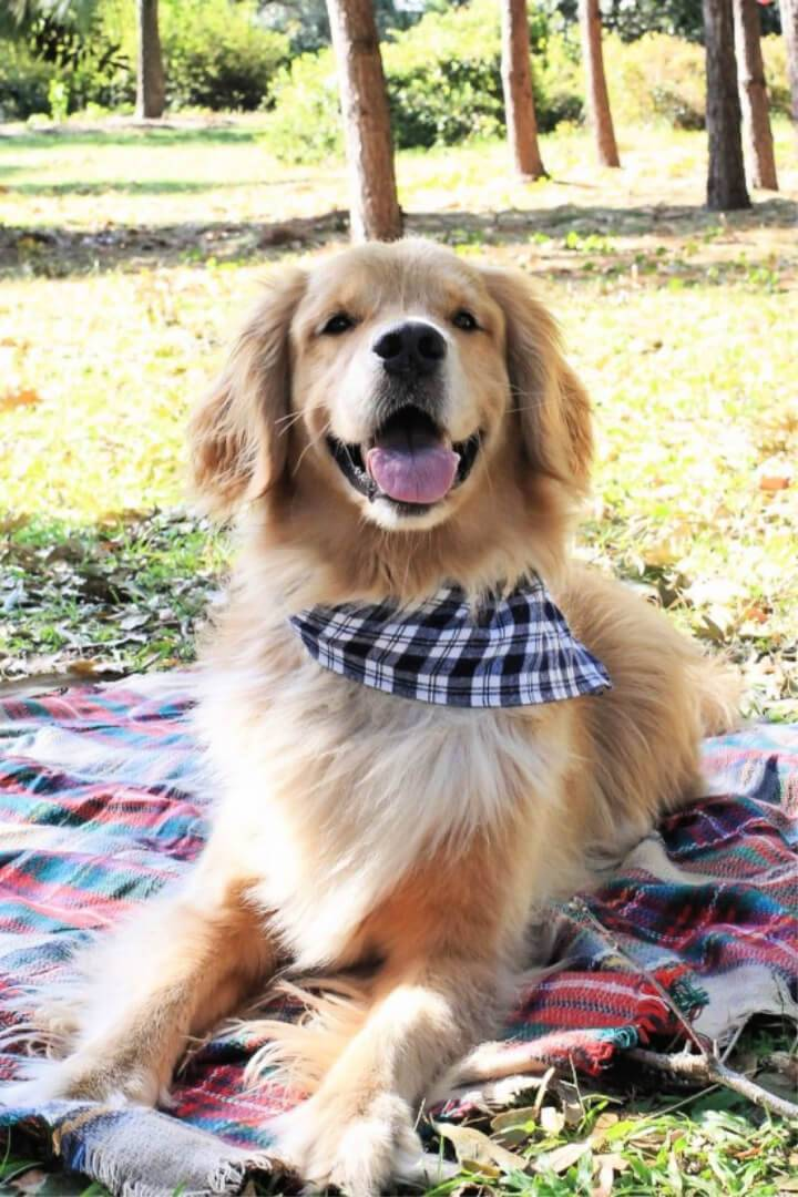 DIY No Sew Dog Bandana