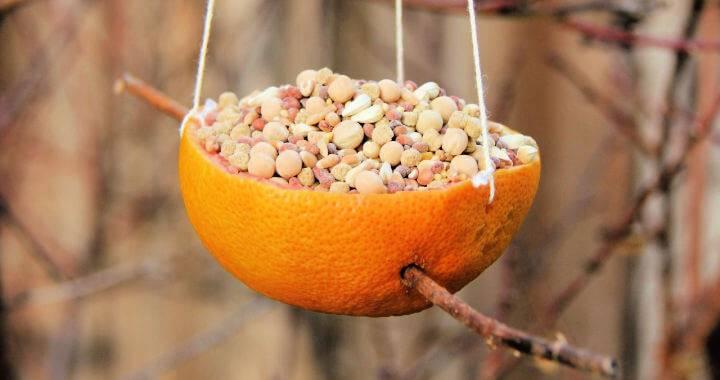 DIY Red Grapefruit Bird Feeder Tutorial