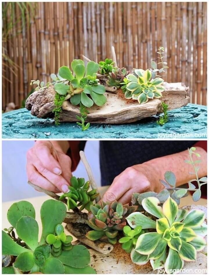 DIY Succulent Driftwood Arrangements