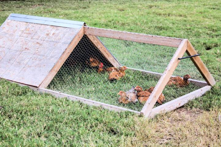 Easy to Build a Chicken Tractor
