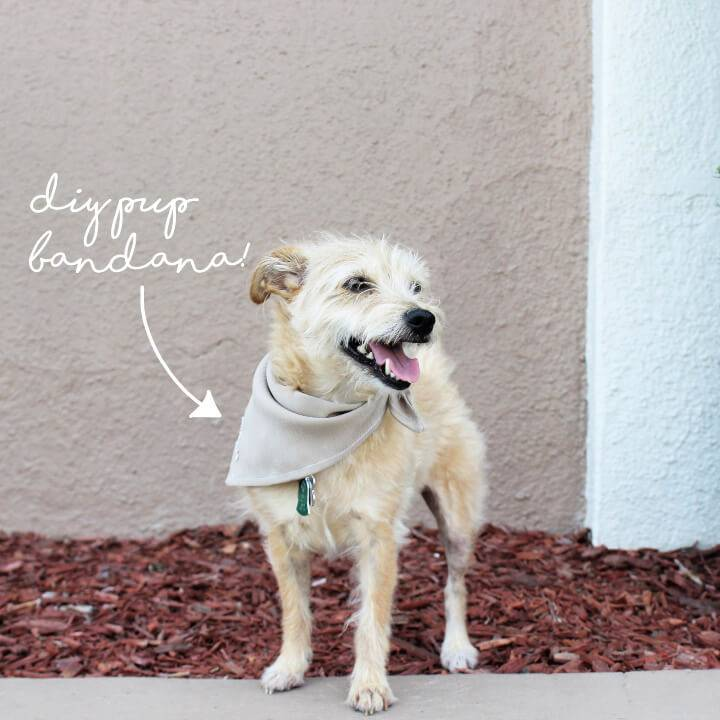 How to Sew an Easy Pet Bandana