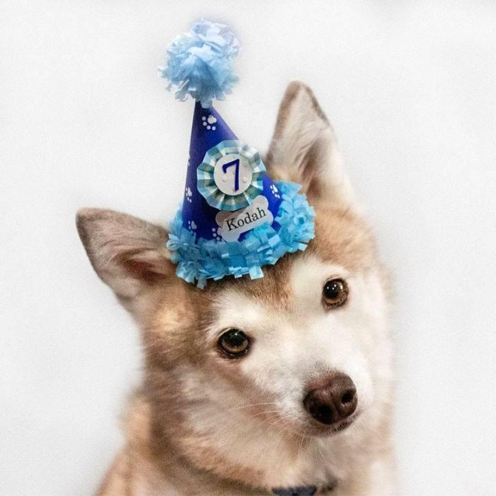 7th Birthday Dog Hat