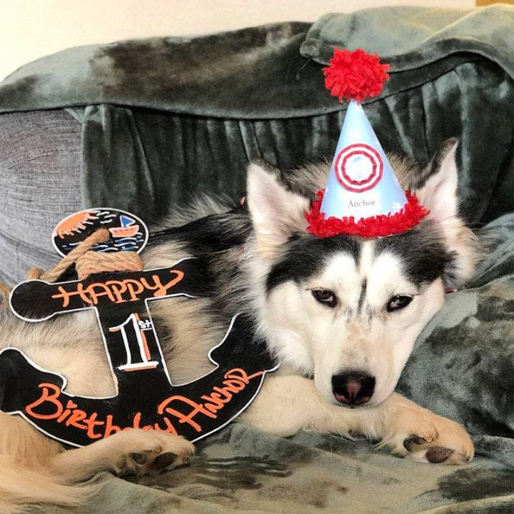 Adorable Dog Birthday Hat