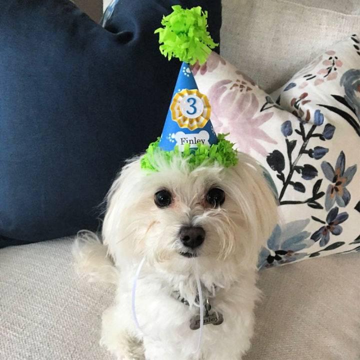 DIY Birthday Hat for Boy Dog