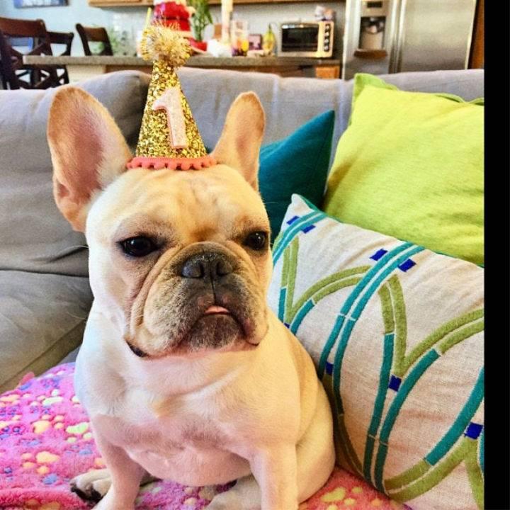 DIY Dog Birthday Crown