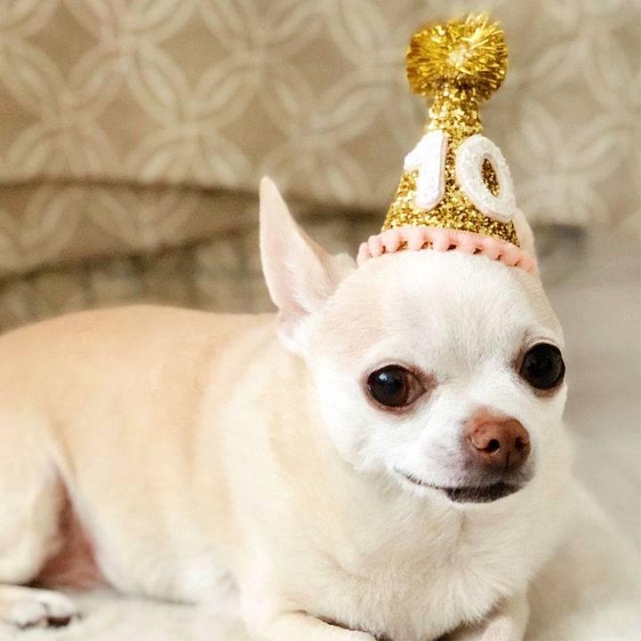 Golden Birthday Hat for Dog