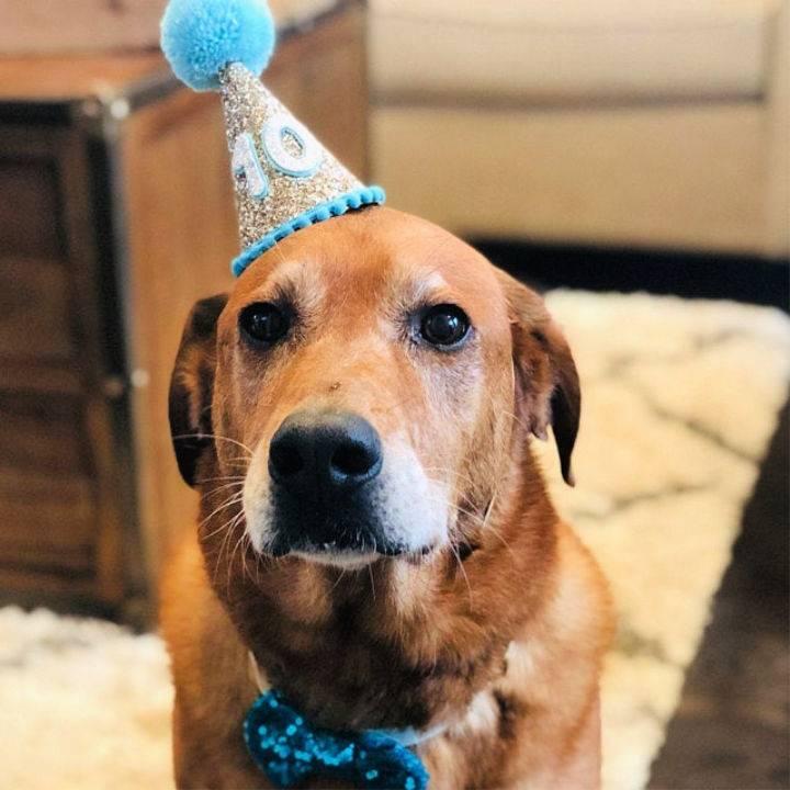Pom Pom Dog Birthday Hat